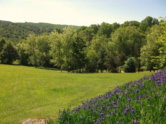 Mountain Song Inn: The front yard