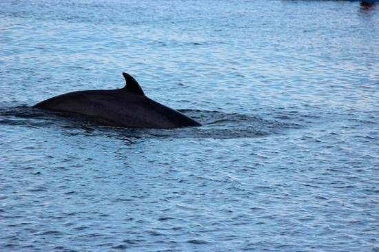 Paradis Marin : Nearby whale.