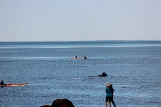 Paradis Marin : this is how close the shore is from the whales
