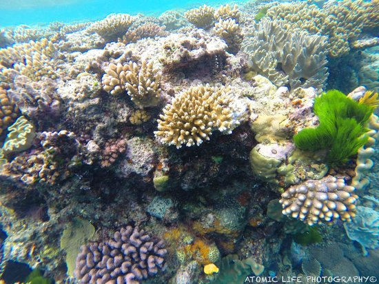 Wavelength Reef Charters: South North Opal pic 1