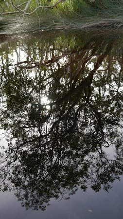 The Discovery Group : Amazing Reflections in the water