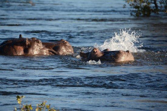 Ra-Ikane : Hippo
