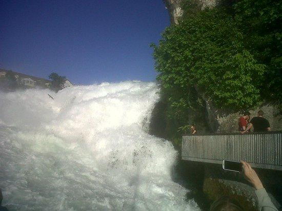 Rhine Falls : Mirante