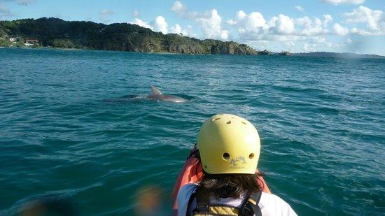 Cape Byron Kayaks