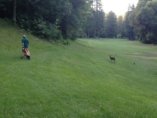 Boulder Creek, CA: Bambi says please play through....