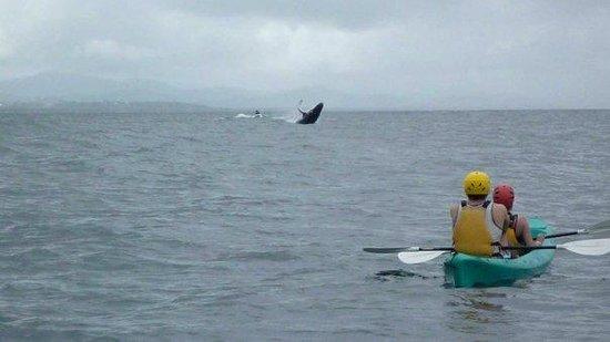 Cape Byron Kayaks: Smack Down