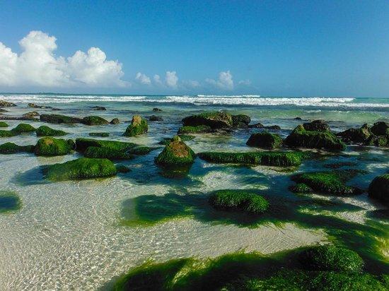 Iberostar Paraiso Lindo: Caminando a Playa Maroma
