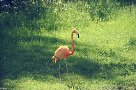 Greater Vancouver Zoo: Flamingo
