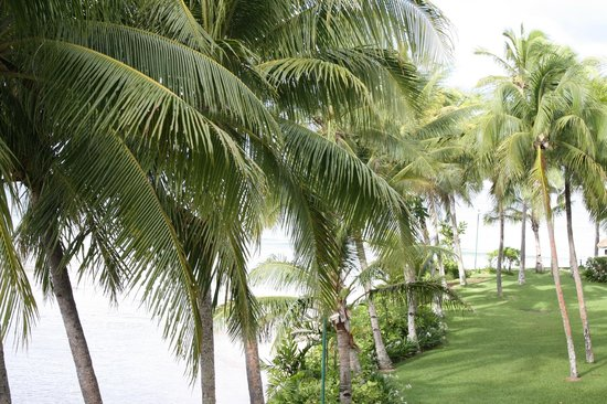 Outrigger Fiji Beach Resort : Looking out at view from the Balcony