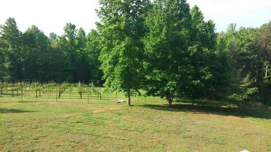 Arcady Vineyard Bed & Breakfast: Lovely view of the vineyard from our deck