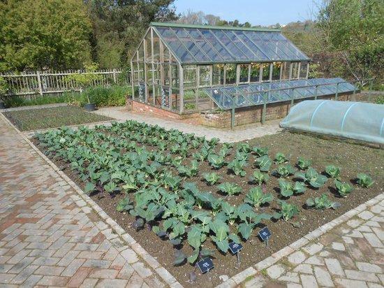 RHS Garden Rosemoor: The vegetable area