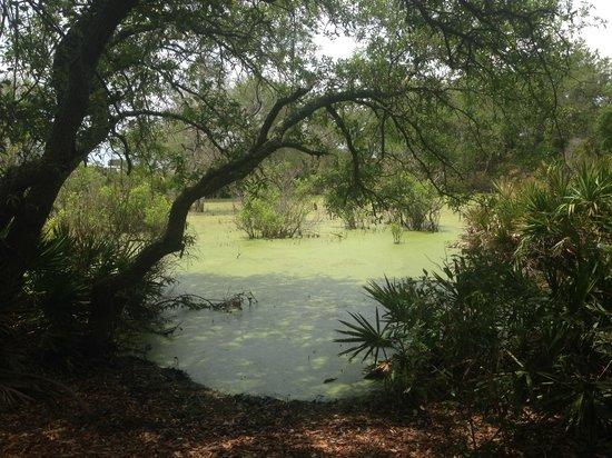 St. Andrews State Park: gator lake
