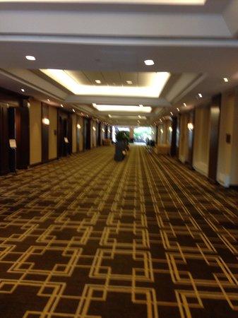 Hyatt Regency Greenwich: Hallway