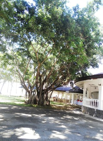 Pacific Cebu Resort: Grounds