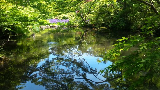 Nezu Museum: 池越しにアヤメを臨む