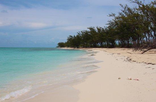 Resorts World Bimini : Beach area
