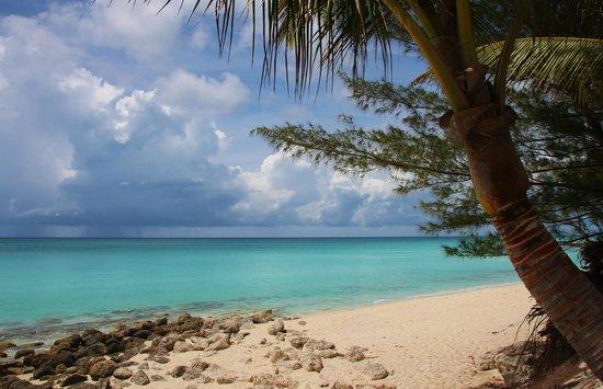 Resorts World Bimini : scenery around Bimini