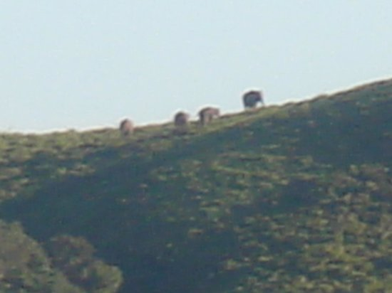 Gavi Forest : Gavi elephant