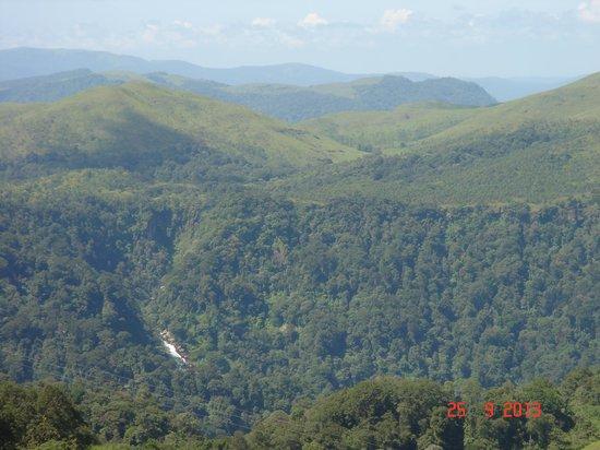 Gavi Forest : Scenery
