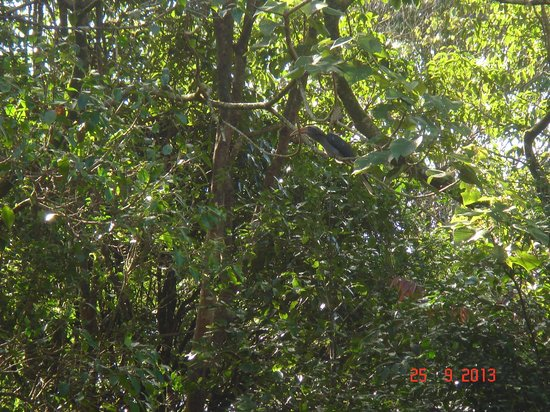 Gavi Forest : Bird