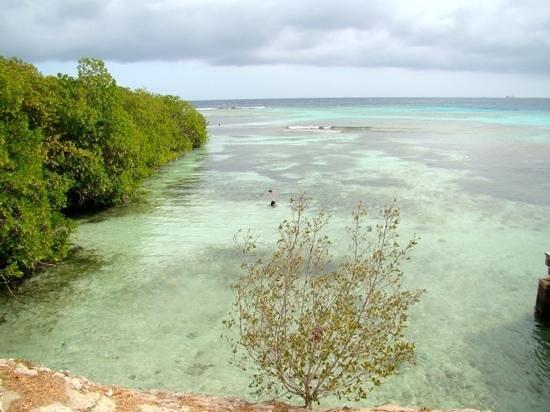 Mangel Halto Beach: Nice snorkel site