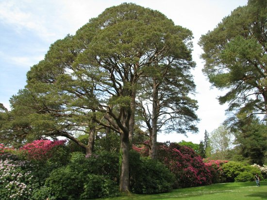 Muckross House, Gardens & Traditional Farms: Muckross House Grounds - 1