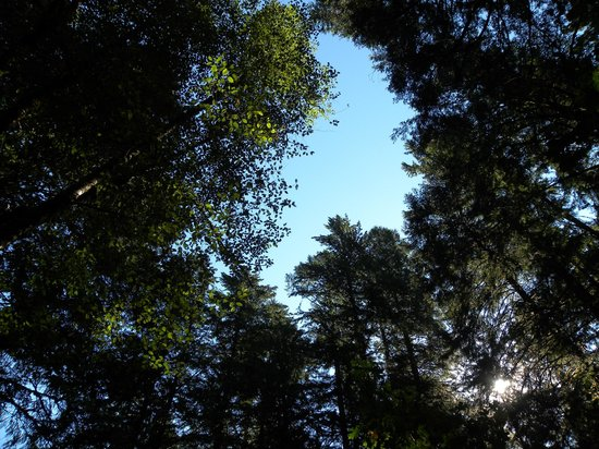 Cedarwood Lodge : Doesn't get any better than this blue skies through the trees