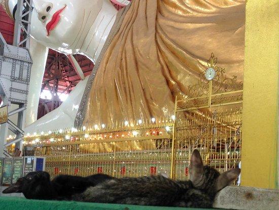 Chaukhtatgyi Buddha: Two of the pagoda's many cats meditating before the Buddha
