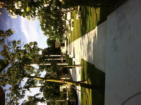 AKA Resort & Spa: Row of beautiful frangipani trees