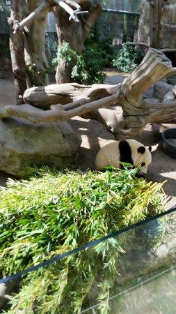 San Diego Zoo: Baby Panda