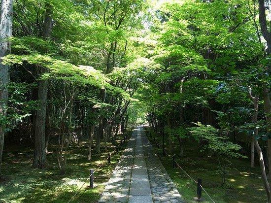 夏の鹿王院 - 京都市、鹿王院の...