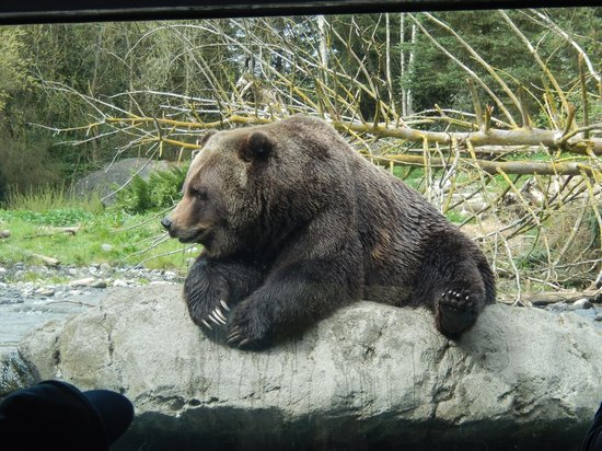 Woodland Park Zoo: Grizzly Bear exhibit on the Northern Trail