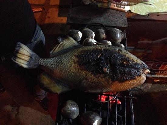 City Baywalk: huge titan triggerfish and clams