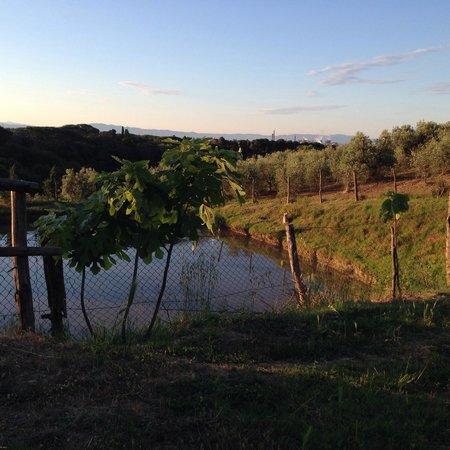 Agriturismo de Santis : Il laghetto....