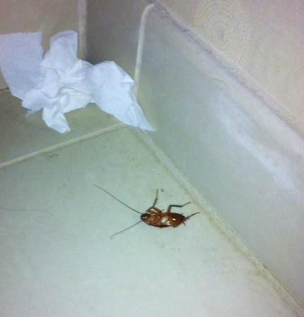 Embassy Suites by Hilton Hotel Palm Desert: Cockroach in the bathroom