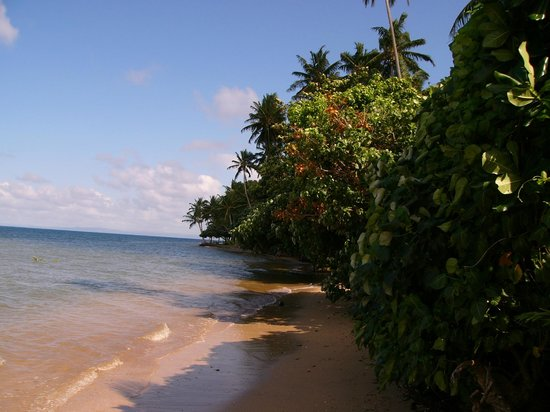 Fiji Beach Shacks : Beach area