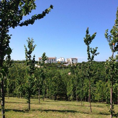 Contea dei Ciliegi: view from the garden