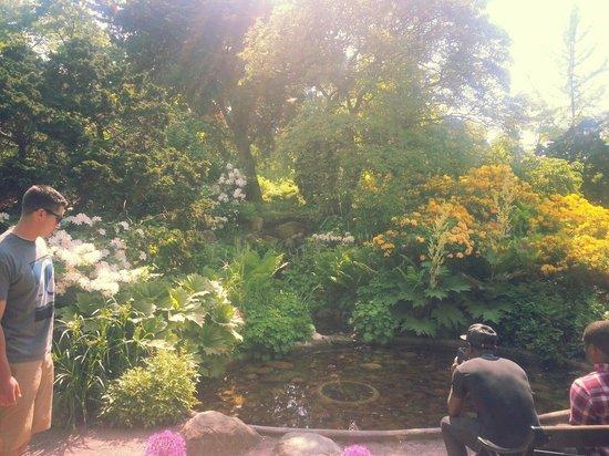 Horticultural Gardens (Tradgardsforeningen): Simply beautiful!