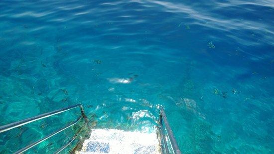 Maritim Jolie Ville Royal Peninsula Hotel & Resort : ladder to your piece of ocean