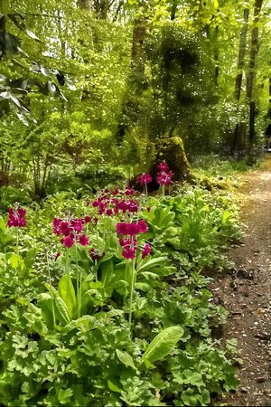 Achamore Gardens : woodland walk