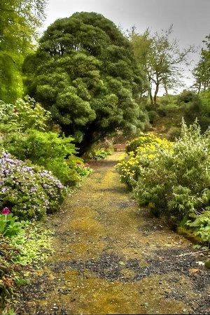 Achamore Gardens: in the walled garden