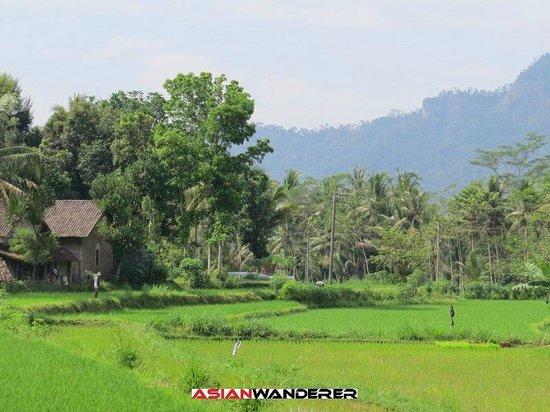 Plataran Borobudur Resort & Spa: View from Paddy Cabana rooms