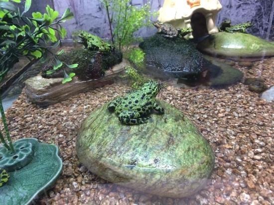 Coex Aquarium: зеленая красота ;)