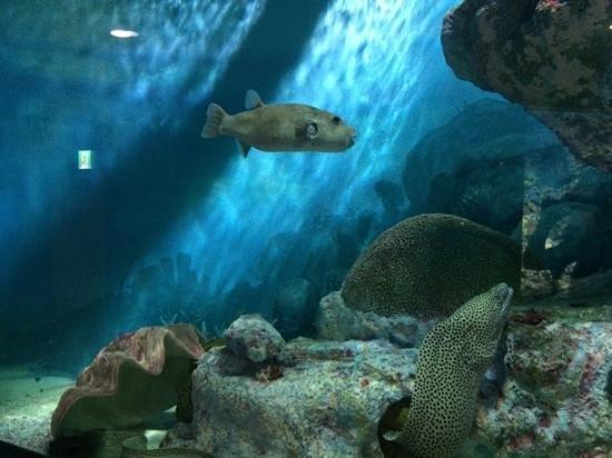 Coex Aquarium: рыба собака ;)