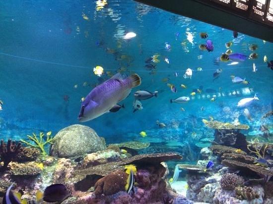Coex Aquarium: красотища