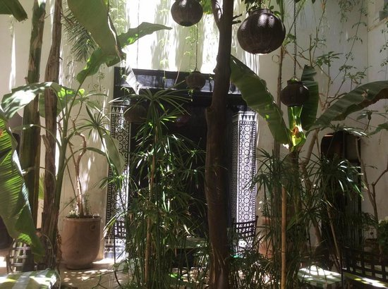 Riad Tibibt: Courtyard. Where you will have breakfast. and lounge about.