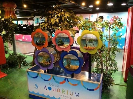 Coex Aquarium: аквариумы ;)