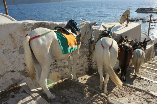 Amoudi Bay : Your transportation up if you spare 5eur
