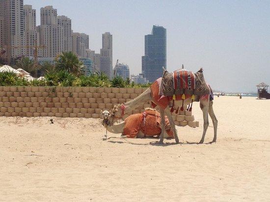 Le Royal Meridien Beach Resort & Spa: Taxi anyone