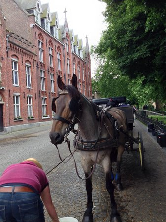 Horse Drawn Carriage Tours: Merlin, our trusty steed